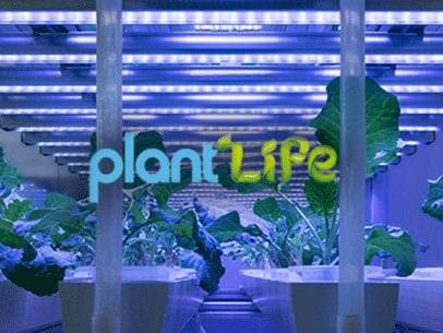 Plantlife Hydroponics Website